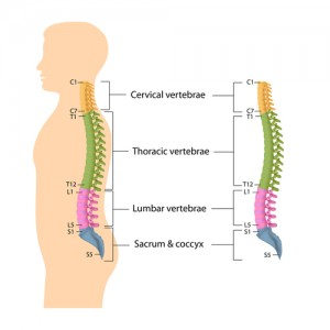 spine, lumbar spine, cervical spine, thoracic spine, Houston, Sugarland, Woodlands, Katy, Spring, Sealy, Baytown, Pearland, Beaumont, Galleria, Conroe, Humble, Kingwood, Port Arthur, Galveston, Memorial City, Texas Medical Center, TMC, Texas, TX, Dallas, Fort Worth, San Antonio, Austin